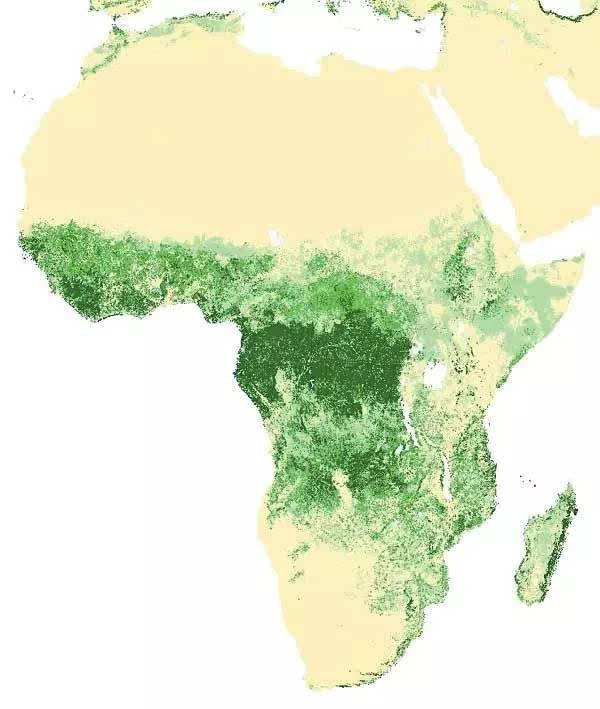 种一棵树还不够,卫星地图还原世界39亿公顷「森林