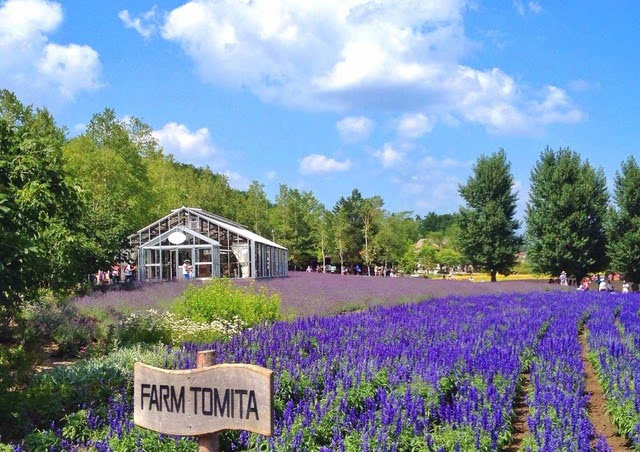 更可以在紧邻highland furano的薰衣草森林公园游步道中,享受一场充满图片