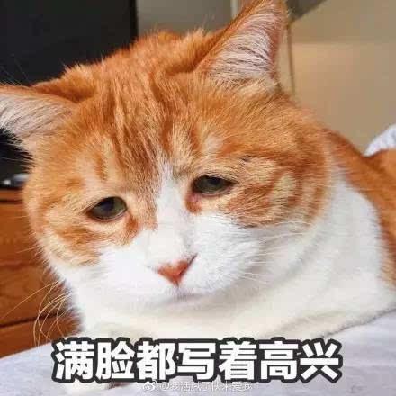 这只橘猫大概是世界上最丧的猫了!明明是天生的表情包图片