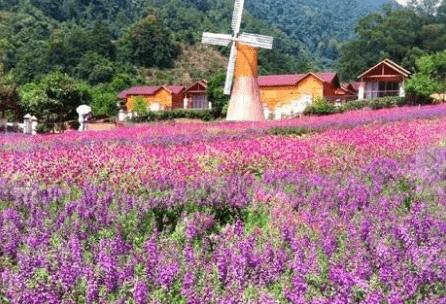 台湾芝麻旅游:台湾薰衣草森林图片