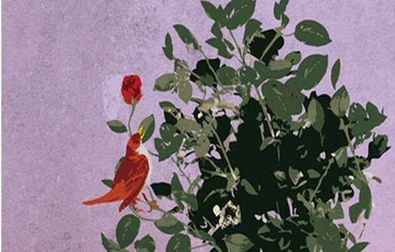 夜莺与玫瑰英文朗�_7日阅读训练营 day 1 丨《夜莺与玫瑰》