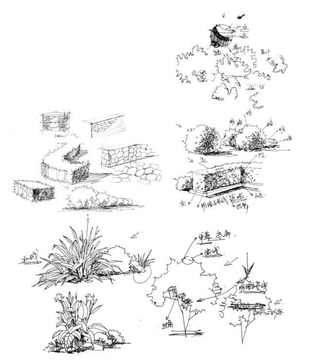 低矮灌木手绘线稿