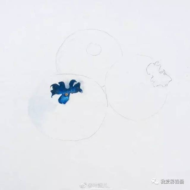 彩铅手绘蓝莓~~过程图