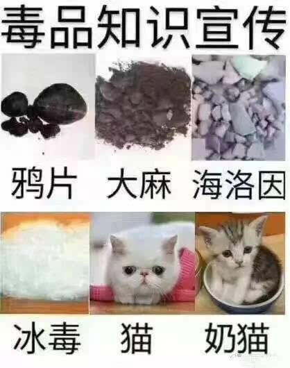 www撸逼网_网红驾到 | 快来和小薛一起云撸猫