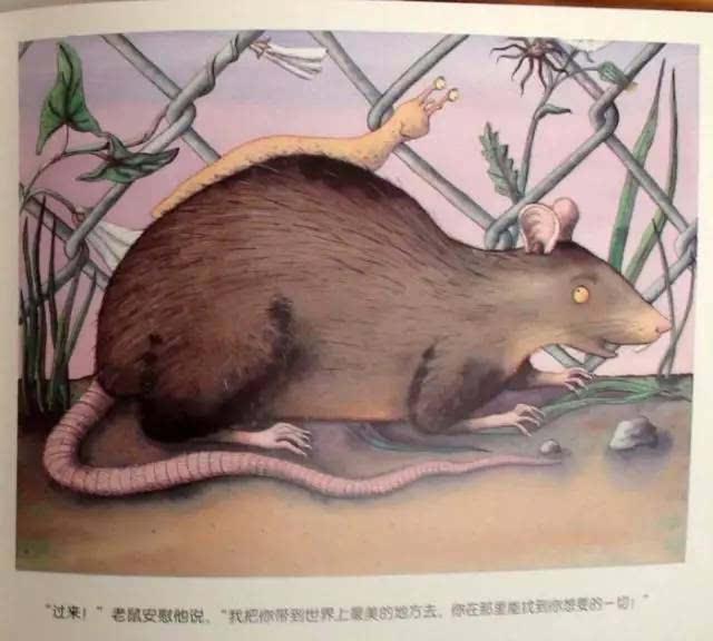 【see教给】小蝙蝠的新房子相处小朋友和小动物友善阅读蜗牛大树鹿图片