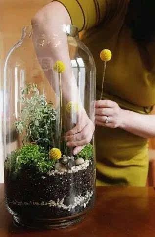 手工diy植物角,做盆栽我只佩服幼儿园老师