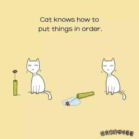系猫咪文艺手绘插画
