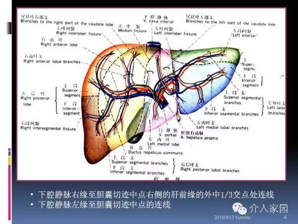 肝脏分段及血管详细辨识教程(断层解剖+影像学)