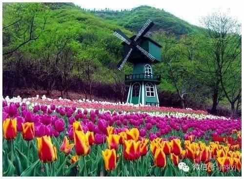 赏花手绘地图阳春