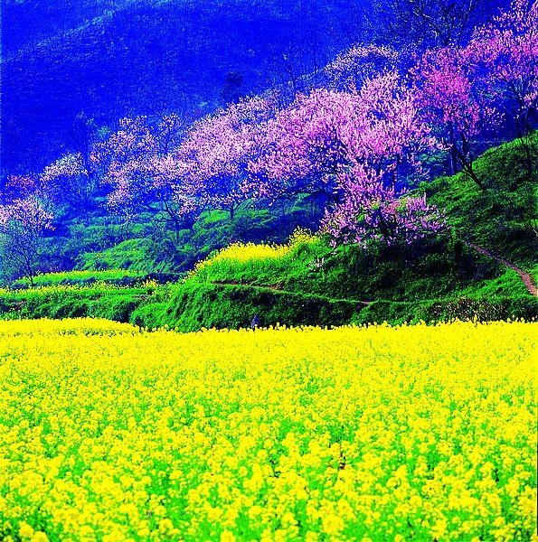 乡愁:谁能忘却家乡美--(美丽信阳) - 玉龙雪山 - 玉龙雪山的博客
