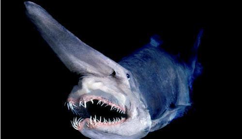 深海生物,难得一见的生物种类