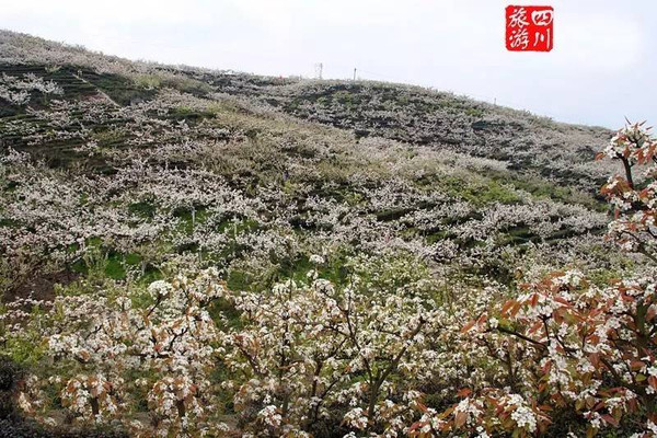 锦屏镇梨花节_这里就是宜宾屏山锦屏镇.
