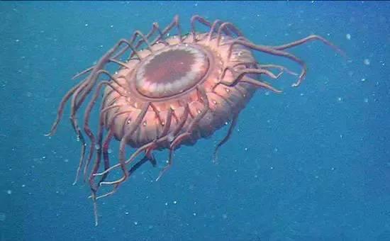 探索发现未解之谜:UFO为何常光临海洋