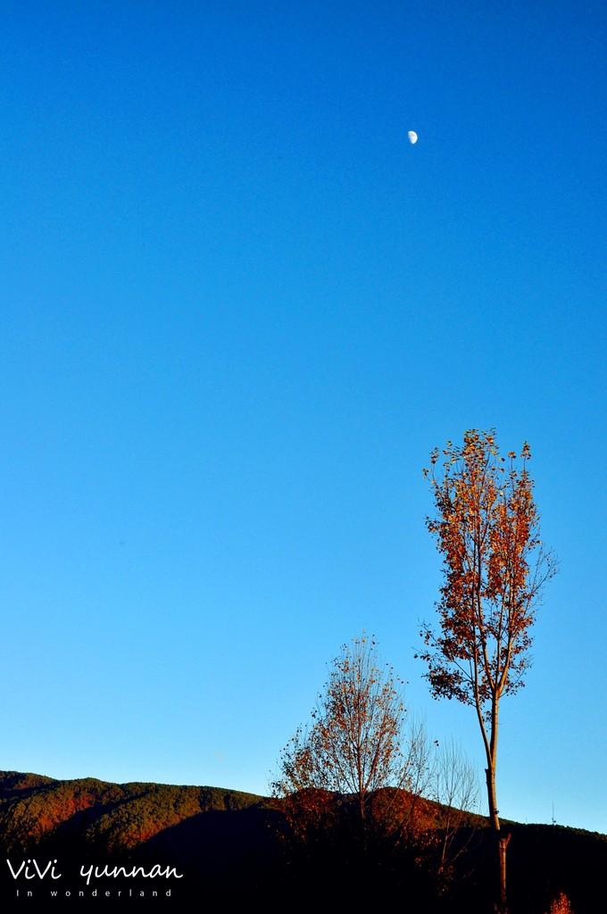 岁月静好阳光明媚 只因是在丽江