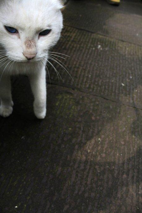 壁纸 动物 猫 猫咪 小猫