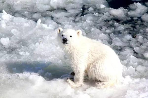 共200多只野生动物,包括熊