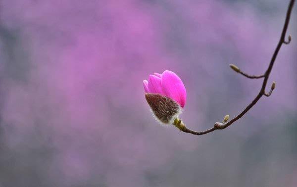 【赏花】花溪景.胭脂梦