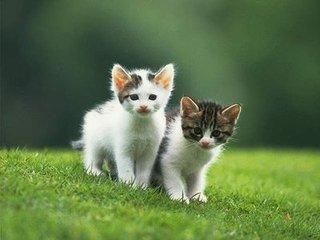 猫怀孕图片图片