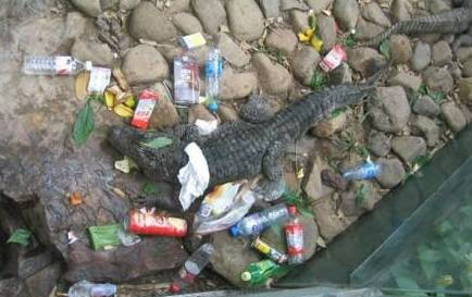 朝着鳄鱼丢矿泉水瓶等垃圾,有的甚者搬起石头砸鳄鱼.