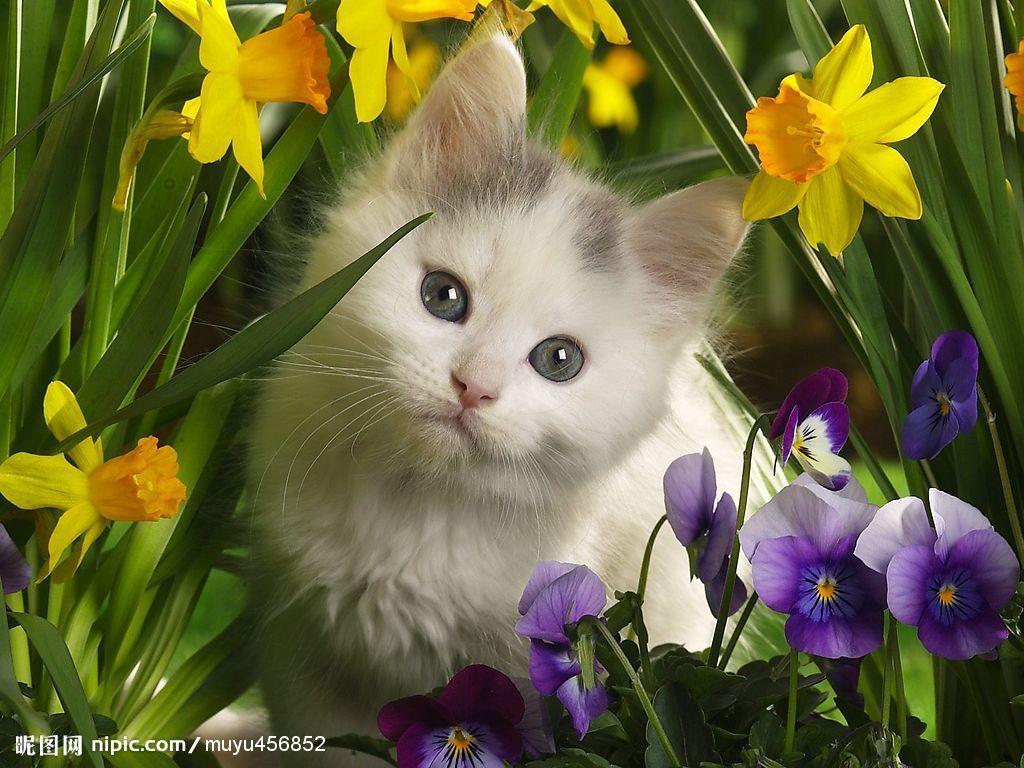 猫的怀孕周期图片