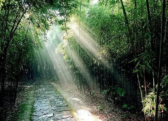 雨后动态竹林 壁纸