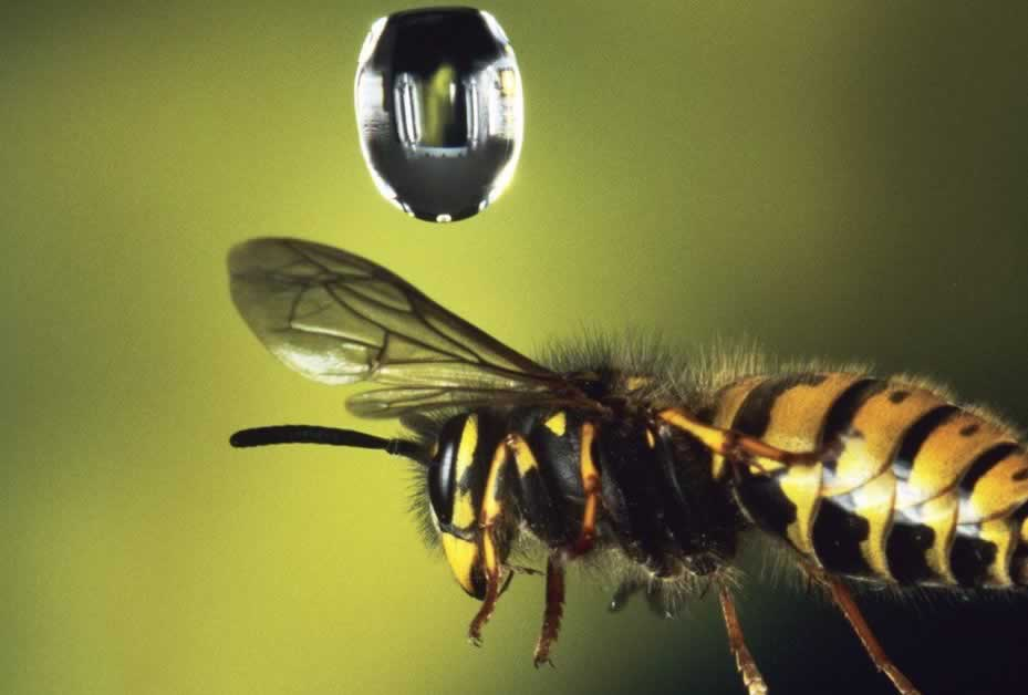 this is   wasp