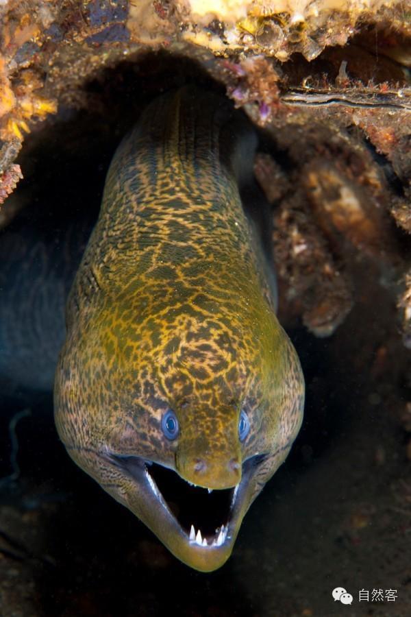 鳗内部结构