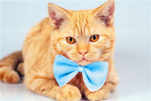 猫咪打喷嚏是生病了吗图片