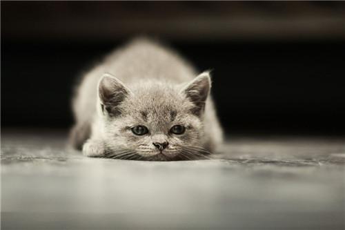 猫咪打喷嚏流鼻涕怎么办图片