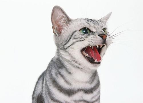 小猫感冒症状能自愈吗图片