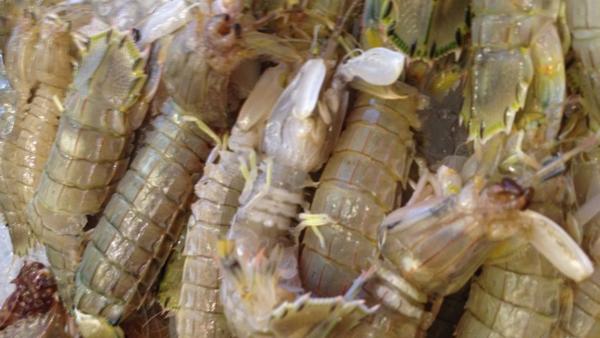吃虾爬子的季节到了!原来大连这个地方的虾爬大肠炒黄豆图片