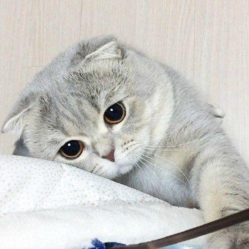 猫打喷嚏喷出粘稠鼻涕图片