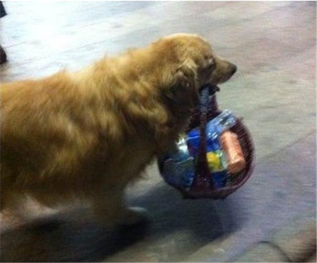 狗狗每天都乱翻垃圾桶的原因令人心暖
