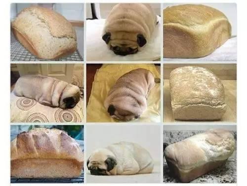吐司什么成语_吐司面包图片