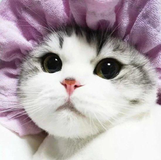 可爱的小猫猫带着一副馋馋的表情围过来