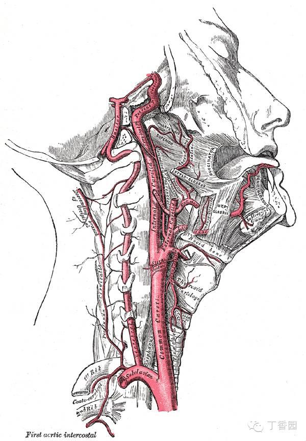 脖子喉结处肿大-孕妇颈部卡护栏,死因到底是什么