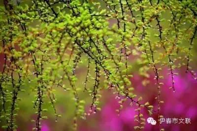 阅读小兴安岭的春天