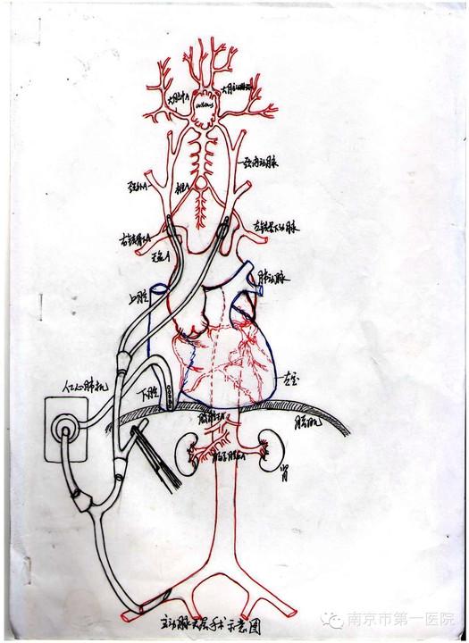 观察人血涂片手绘图