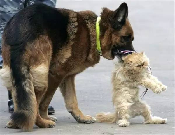最帅的狗_世界上最帅的狗就是它了