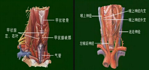 其实这取决于甲状腺结构的复杂性及其周边组织和血管的丰富程度.