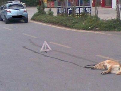 高速上撞了动物保险公司赔吗? 手机搜狐网