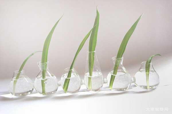 制作家庭水培小盆栽植物方法