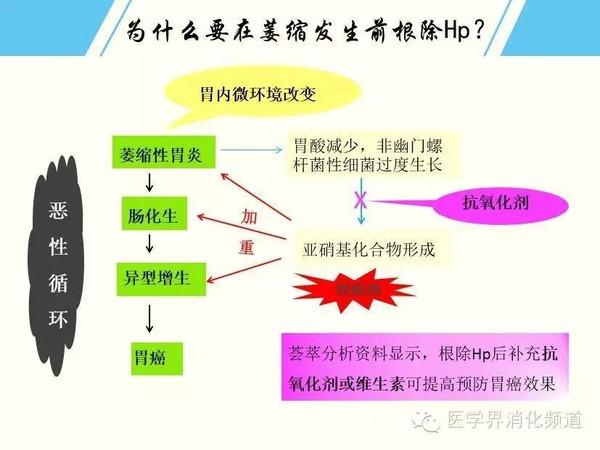 幽门螺杆菌(Hp)与胃癌的爱恨纠葛
