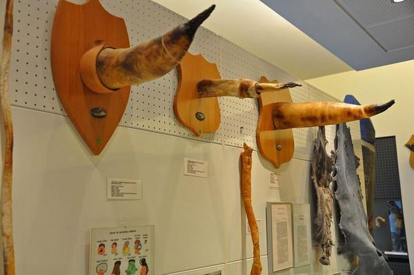 辣眼睛 揭秘全世界第一个丁丁博物馆