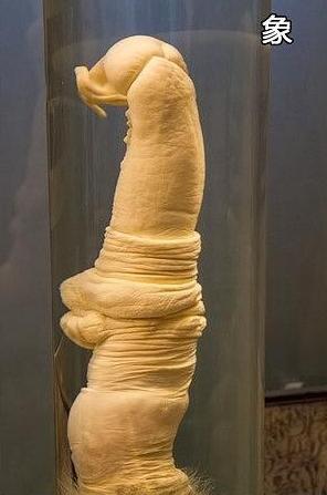 这家神奇的博物馆,女人看了面红耳赤,男人看了鞭长莫及