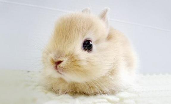 刚出生的小动物太可爱