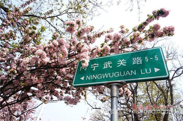 樱花初落,海棠盛开,青岛八大关的美景从来不会间断
