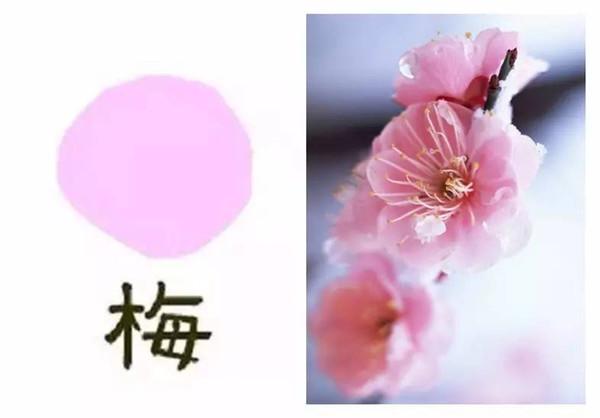 """【樱花】花瓣呈水滴状,顶部会有小""""缺陷""""-樱花 梅花 桃花傻傻分不"""