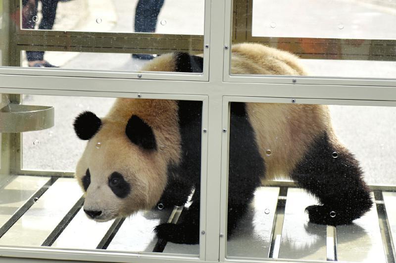 中国熊猫韩国正式亮相 民众激动万分