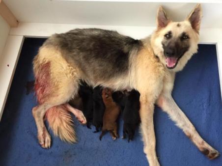 人们从废墟中救出一只狗,看清它身下时惊呼O